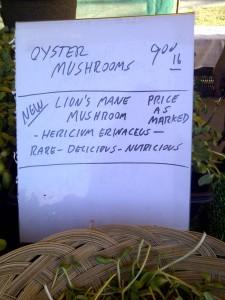Lion's Mane mushroom sign